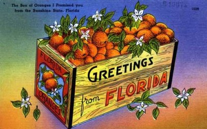 Florida Post Card 1